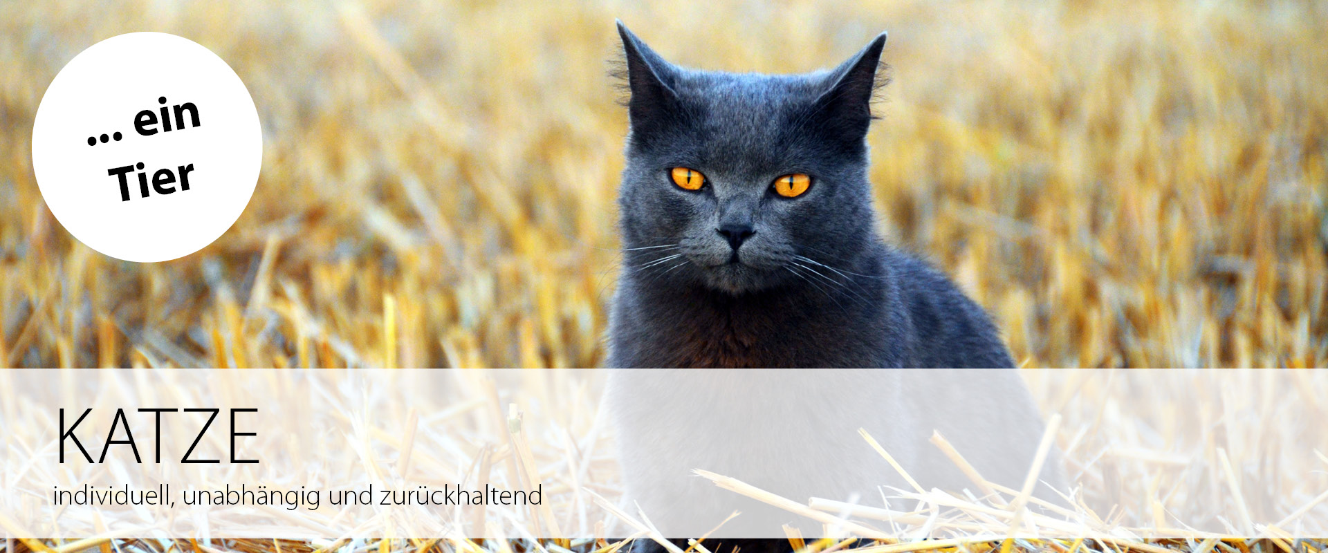 Ein Tier: Katze